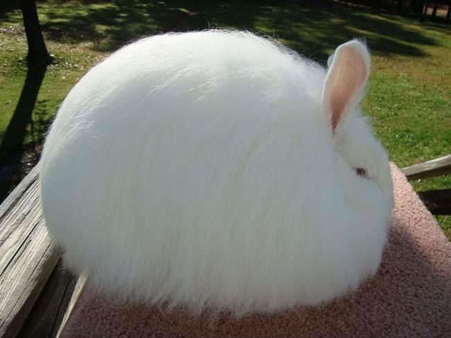 Loại len này có nguồn gốc từ thỏ Angora. Sợi len loại này mềm, mịn, mỏng và rất bông