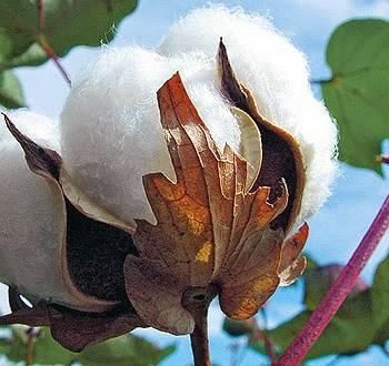 Nhận biết, phân biệt các loại vải làm từ sợi bông (cotton)
