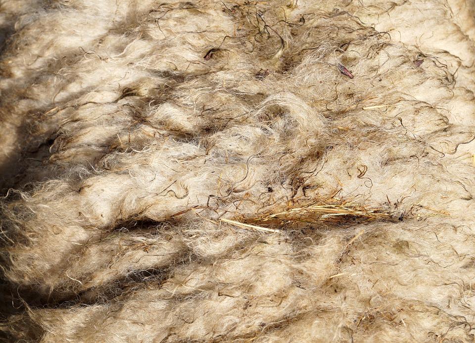 Xơ len lông cừu